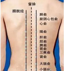 背部膀胱经图片_足太阳膀胱经的循行路线食疗打通经络人体