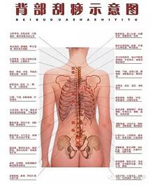 6,肾区诊断   (1)肾区凹陷,腰部颜色发黑,多为肾水不足.
