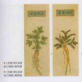 明《本草品汇精要》植物图一组【E】