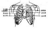 心脏体表位置及听诊区