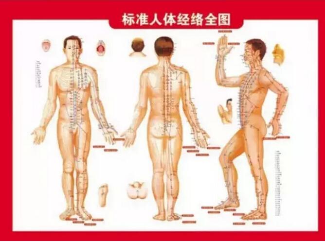 中医十二经络--图解人体经络走向