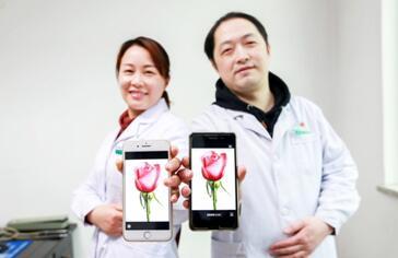 湖北省襄阳市中医医院的一对夫妻档医生通过手机上的电子玫瑰表达浓浓爱意