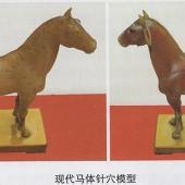 马体针穴模型